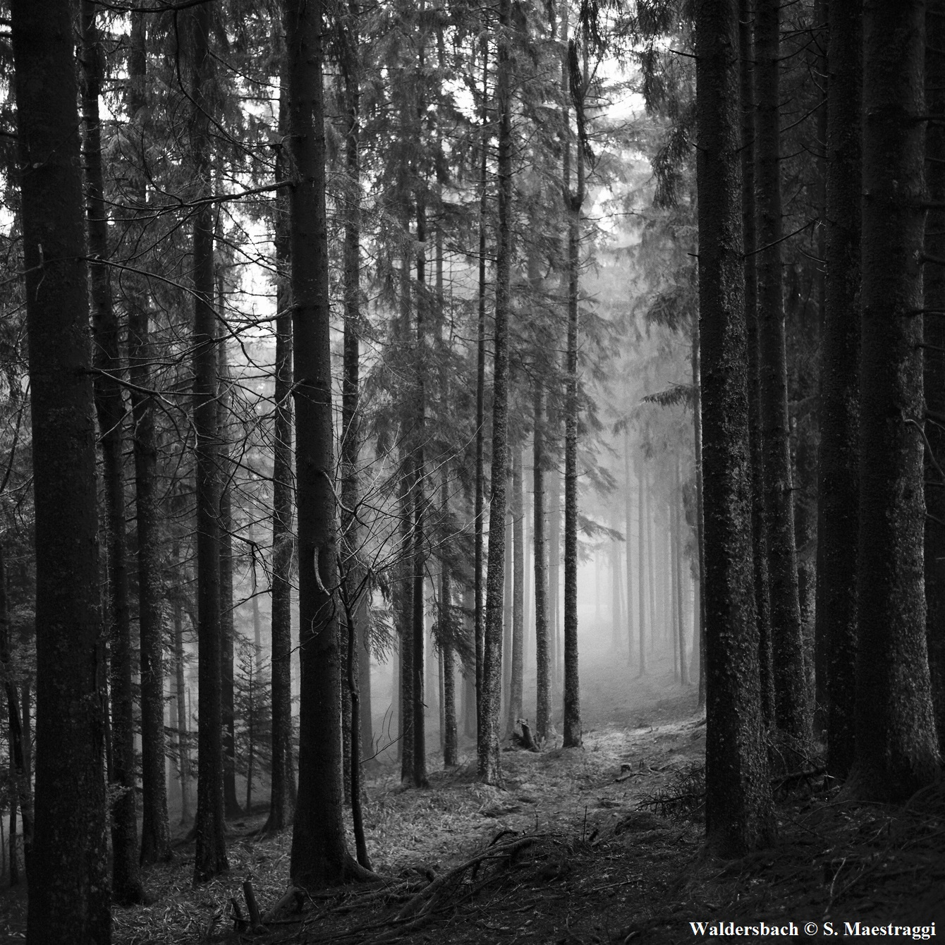 "Extrait de""Waldersbach"" © Sylvain Maestraggi"